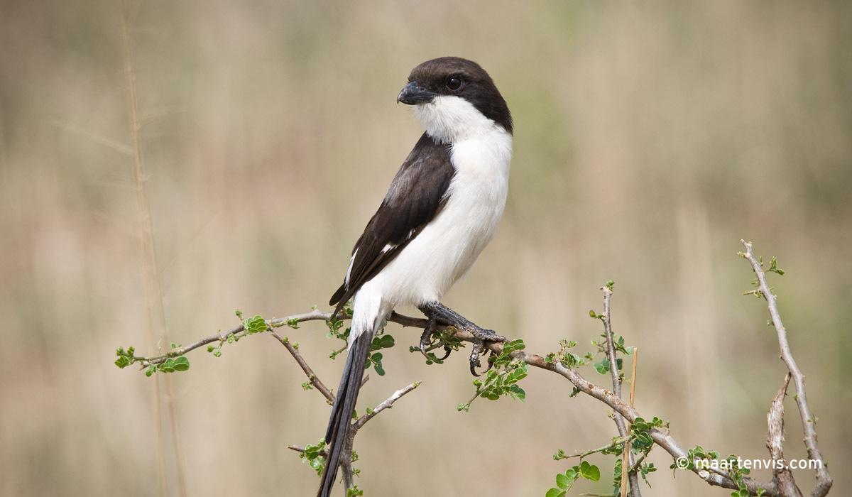 Birding in Katavi National Park