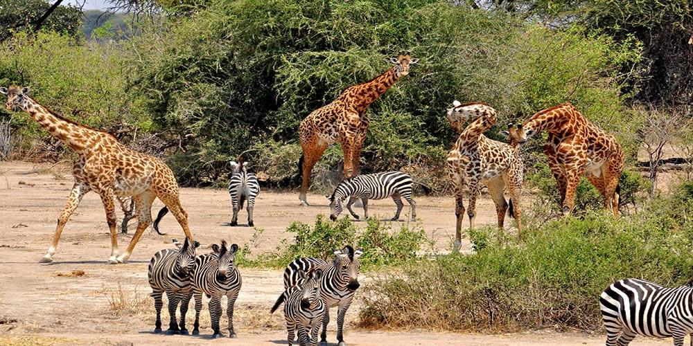 Game viewing in Katavi National Park