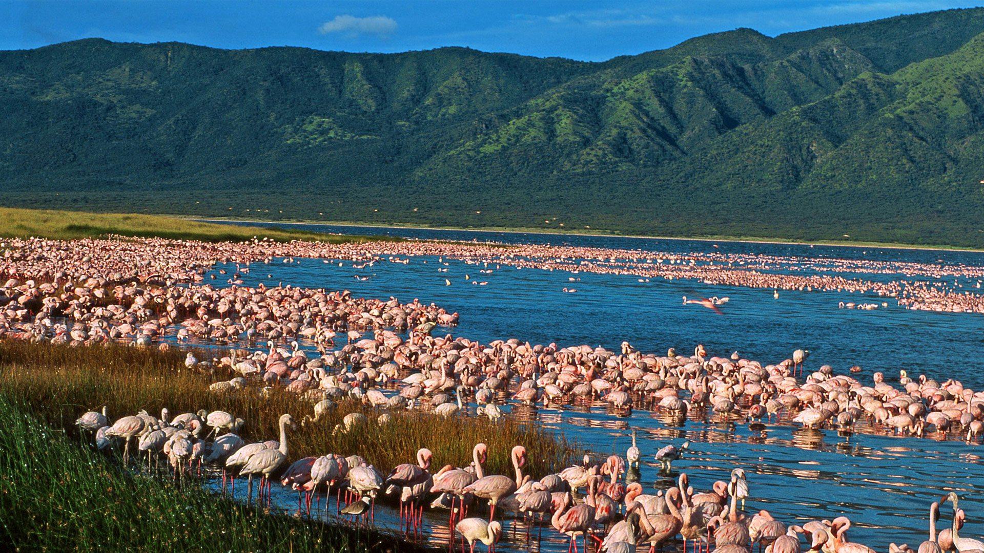 Rift Valley Lakes Region