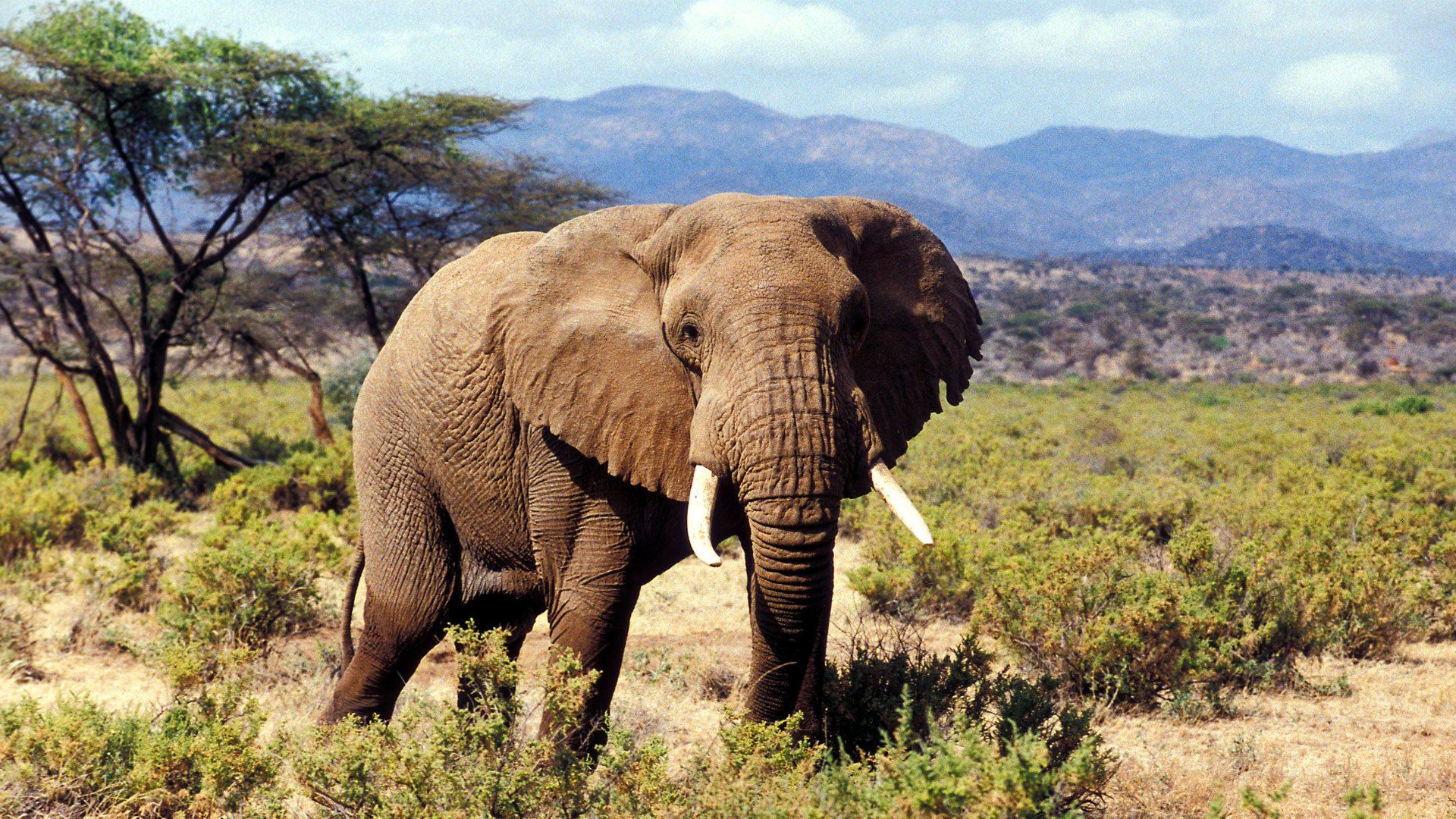 Samburu National Game Reserve