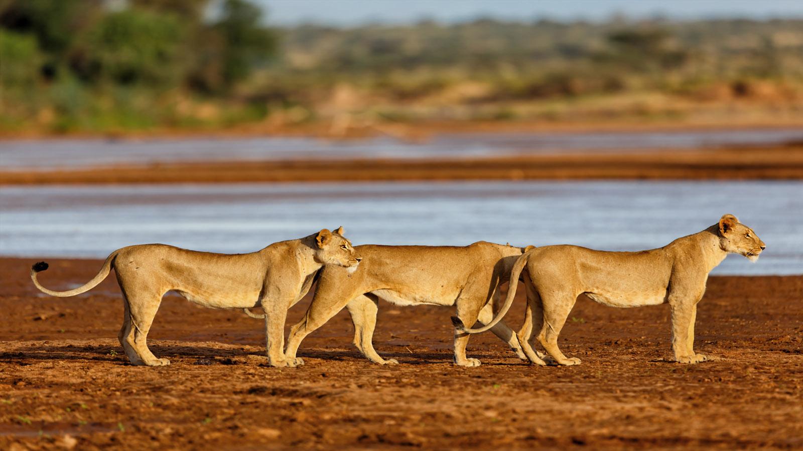 Wildlife Samburu National Game Reserve