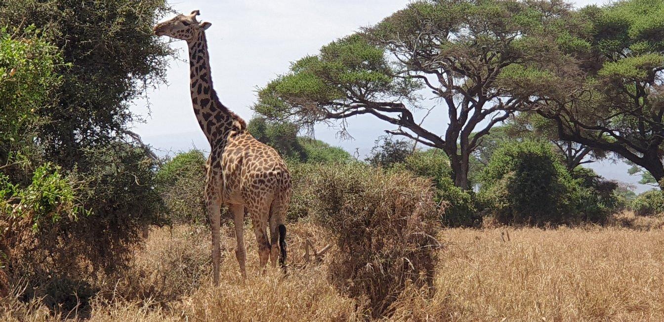 Wildlife in Amboseli National Park