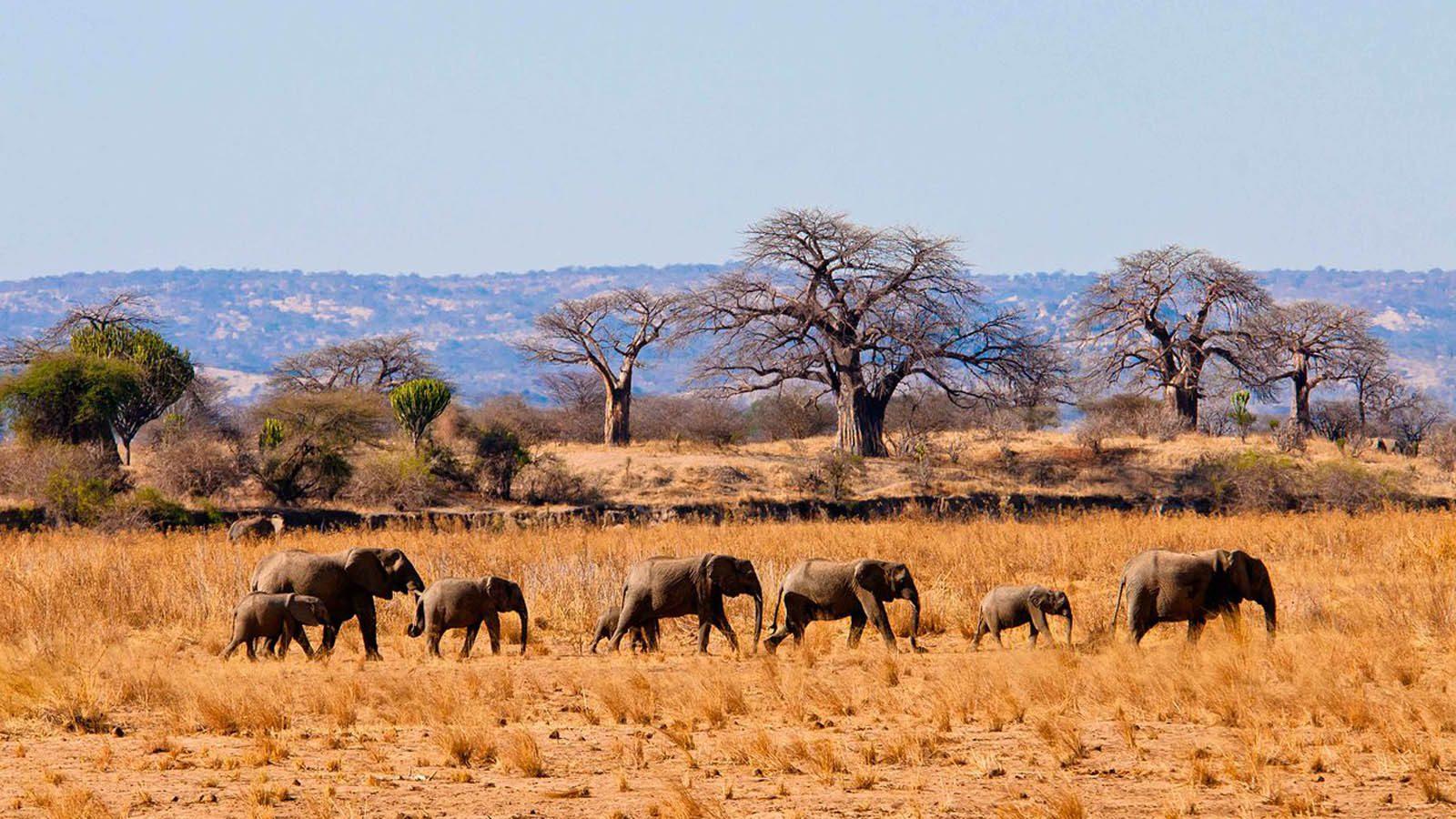 Wildlife in Tarangire National Park