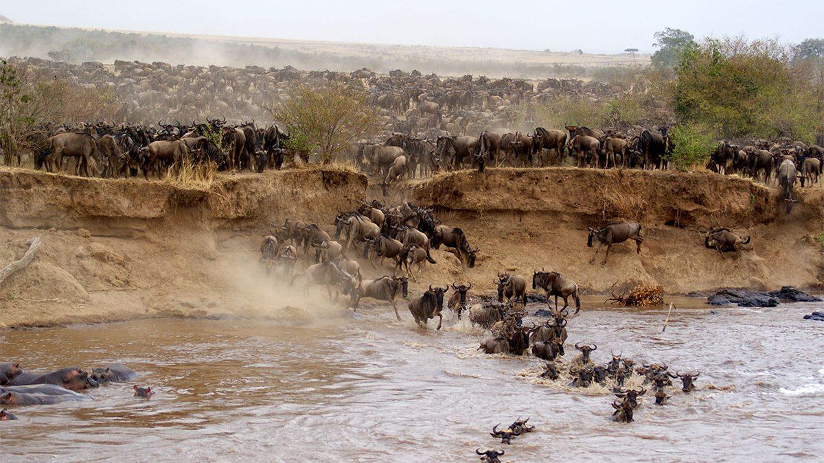 Wildlife in masai mara national reserve